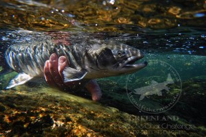 Arctic Char_ Flyfishing_Greenland_Uwe Müller