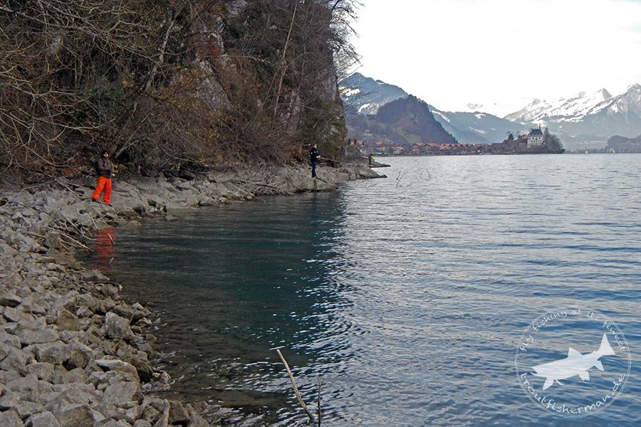 streamstalkin Seeforellen Brienzer See 2014